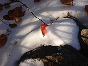 Leaf Photos - Red Leaf by Marilynne Bull