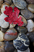 Rock  Photos - Red Leaf Wet Stones by Garry Gay