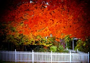 Upperville Posters - Red Leaves and White Fence Poster by Joyce  Kimble Smith