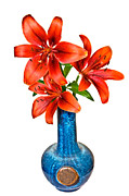 Susan Leggett Photo Metal Prints - Red Lilies in Blue Vase Metal Print by Susan Leggett