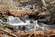 Gatlinburg Tennessee Prints - Red Log Stream Print by Shana Smith