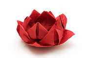 Paper Folding Art - Red lotus origami by Fabrizio Troiani