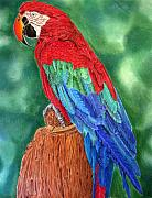 Macaw Drawings - Red Macaw by Dawnstarstudios