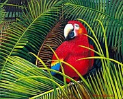 Amazon Parrot Paintings - Red Macaw by Deborah Beaver