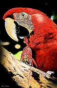 Macaw Mixed Media - Red Macaw Pop Art by Bibi Romer