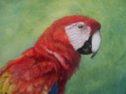 Parrot Print Paintings - Red Macaw  by William Patterson