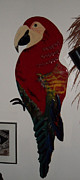 Red Mccaw Print by Val Oconnor