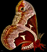 Sweep Image Art - Red Moth by Debra     Vatalaro