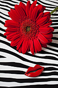 Gerbera Posters - Red Mum And Red Lips Poster by Garry Gay