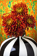 Chrysanthemums  Framed Prints - Red mums in striped vase Framed Print by Garry Gay