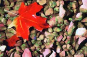 Autumn Leaves Metal Prints - Red on the Rocks Metal Print by Jeff Kolker