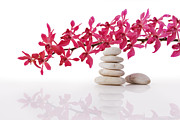 Healthcare And Medicine Originals - Red Orchid With Balance Stone by Atiketta Sangasaeng
