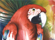 Ground Mixed Media Prints - Red Parrot Print by Anthony Burks
