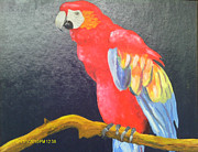 Juliet Nidhan - Red Parrot