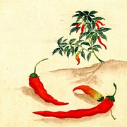 Hot Peppers Framed Prints - Red Peppers and Plant 1830 Framed Print by Padre Art