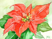 Meltem Kilic - Red Poinsetta