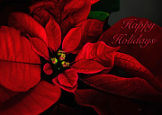 Christmas Cards Photos - Red Poinsettia Happy Holidays Card by Lois Bryan