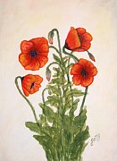 Blooming Paintings - Red Poppies watercolor painting by Georgeta  Blanaru