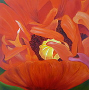 Brilliant Paintings - Red Poppy by Gabriella DICK