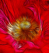Corn Digital Art Framed Prints - Red Poppy Heart Framed Print by Chris Thaxter