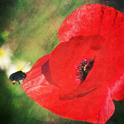 Insects Mixed Media Metal Prints - Red poppy impression Metal Print by Angela Doelling AD DESIGN Photo and PhotoArt