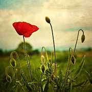 Red. Green Posters - Red Poppy Poster by Violet Damyan