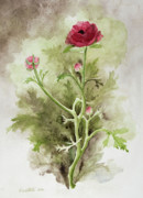 Ranunculus Paintings - Red Ranunculus by Kathryn Donatelli