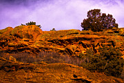 Red Rocks Framed Prints - Red Rocks Park Colorado VI Framed Print by David Patterson