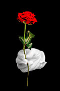 Isolated On Black Background Posters - Red rose and white glove Poster by Richard Thomas