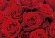 Floral Photographs Photos - Red Rose Bouquet by Kathy Yates