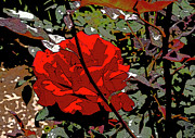 Red Flower Posters - Red Rose Poster by Gilbert Artiaga