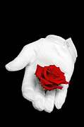 Isolated On Black Background Framed Prints - Red rose held in a white glove Framed Print by Richard Thomas