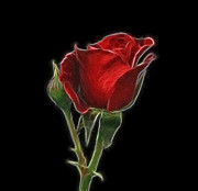Photomanipulation Digital Art Prints - Red Rose II Print by Sandy Keeton
