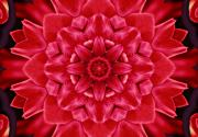 Flower Blooms Digital Art Prints - Red Rose Kaleidoscope Print by Cathie Tyler