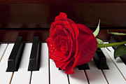 Wet Rose Posters - Red rose on piano Poster by Garry Gay