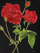 Sue Ervin - Red Rose