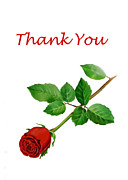Thank You Card Prints - Red Rose Thank You Card Print by Irina Sztukowski