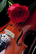Wet Rose Posters - Red Rose With Violin Poster by Garry Gay