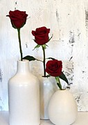 Metals Posters - Red Roses on White Poster by Marsha Heiken
