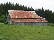 Rusty Pyrography Prints - Red Rusty Tin Roofed Old Barn Washington State Print by Laurie Kidd