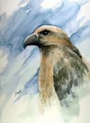 Hawk Paintings - Red by Sam Sidders