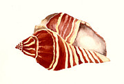 Sea Shell Painting Prints - Red Sea Shell Print by Michael Vigliotti