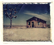 Red Shack Framed Prints - Red Shack and Joshua Tree Framed Print by Joe  Palermo