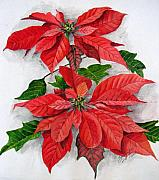 Poinsettias Paintings - Red by Shagufta Mehdi