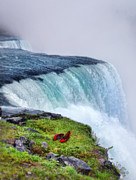 Distraught Framed Prints - Red Shoes Left by the Falls Framed Print by Jill Battaglia