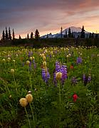 Mt Prints - Red Sky Meadow Print by Mike  Dawson
