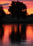 Yakima River Posters - Red Sky Reflection with Tree Poster by Carol Groenen