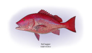 Gamefish Framed Prints - Red Snapper Framed Print by Ralph Martens