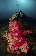 Capturing Posters - Red Soft Coral And Underwater Poster by Mathieu Meur