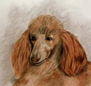Mills Mixed Media - Red Standard Poodle by Terri Mills
